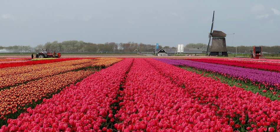 Travelserv - Holland