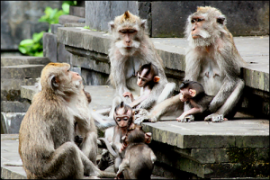 alas kedaton monkey forest