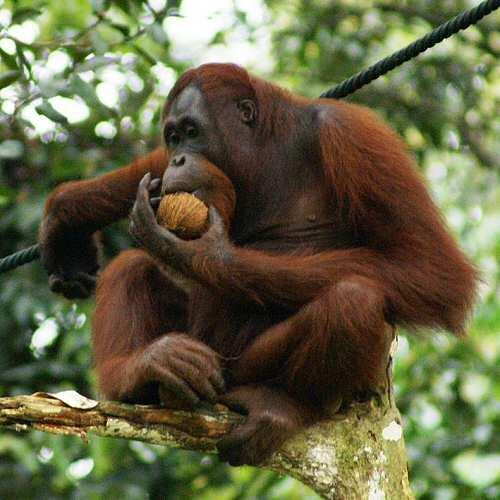 Travelserv - Borneo