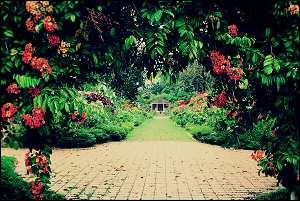 Penang - Botanical Gardens